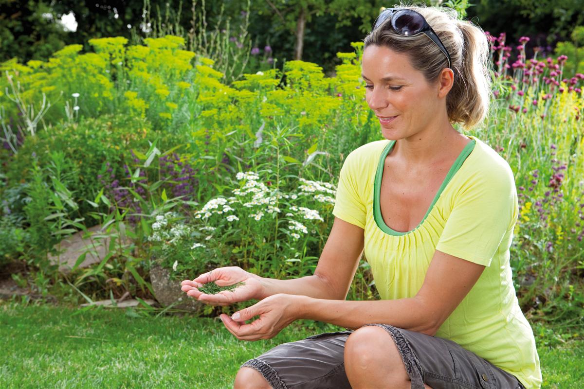 Świetny wynik koszenia - nie trzeba usuwać skoszonej trawy